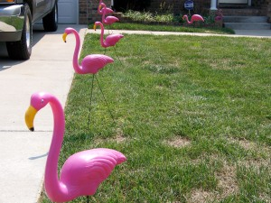 Pink Flamingoes on Parade